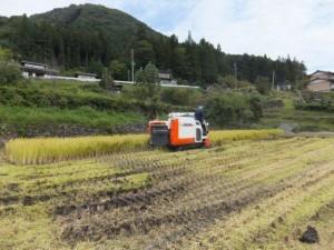 2012稲刈り中♪